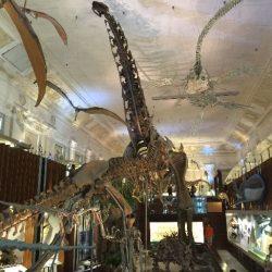 これこれ、これが博物館だよね